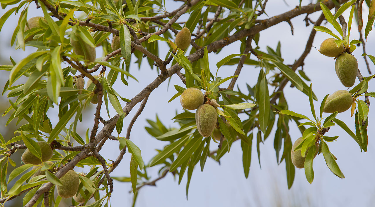 Antioxidantes de almendras