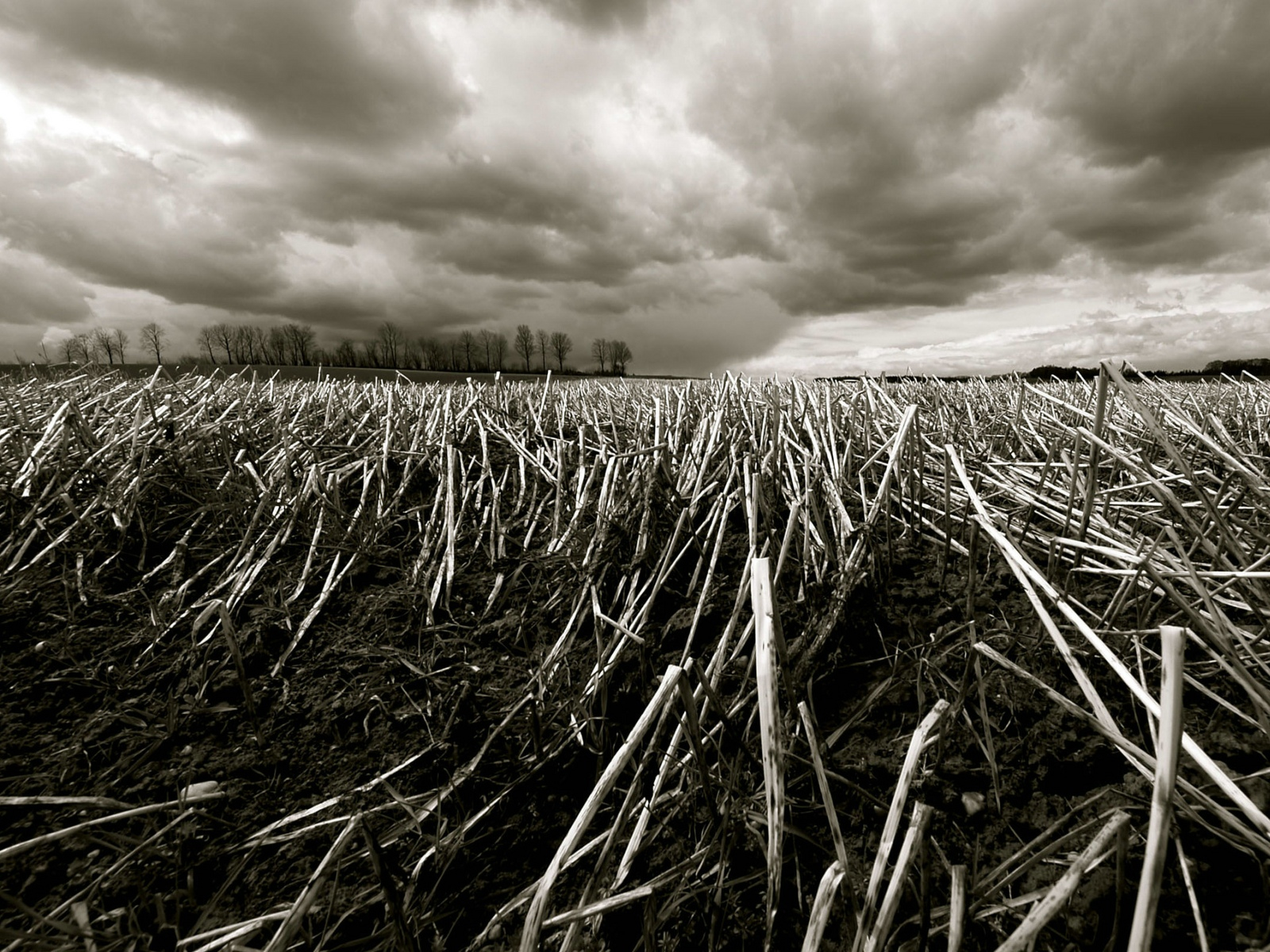 Crisis alimentaria mundial