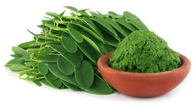 Los beneficios antioxidantes de la moringa