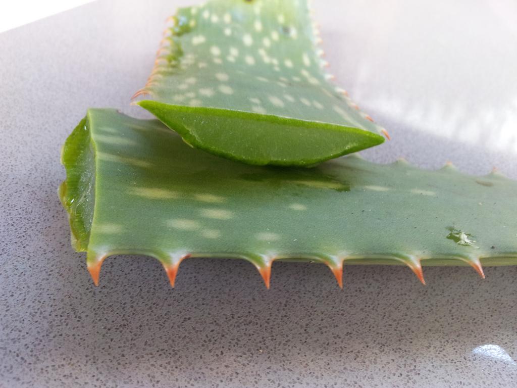 Aloe vera para probióticos