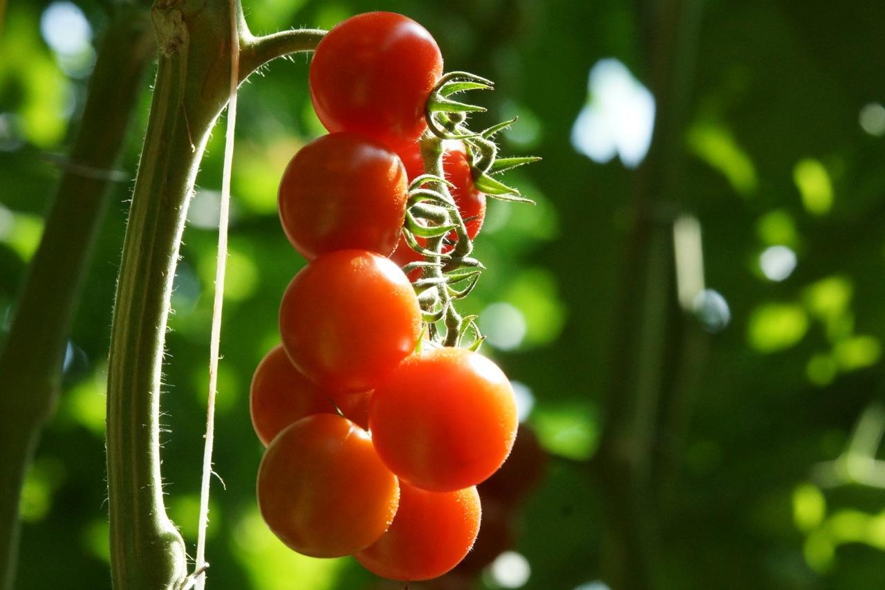 Genéticamente modificado… ¿qué es eso?