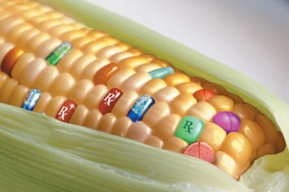Empresa brasileña desarrolla alimentos tradicionales mejorados genéticamente