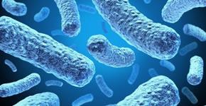 Las bacterias benéficas pueden destruir los agentes patógenos resistentes a los antibióticos