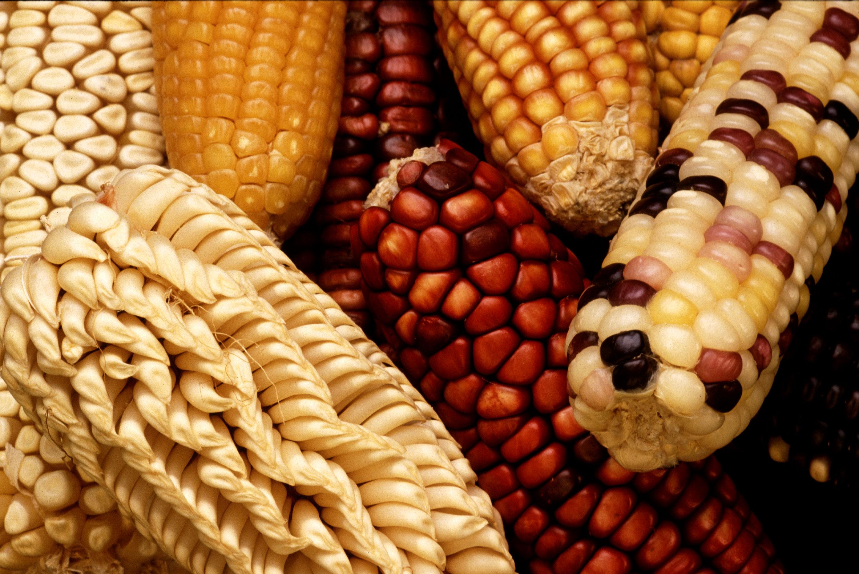 La evolución de nuestra comida
