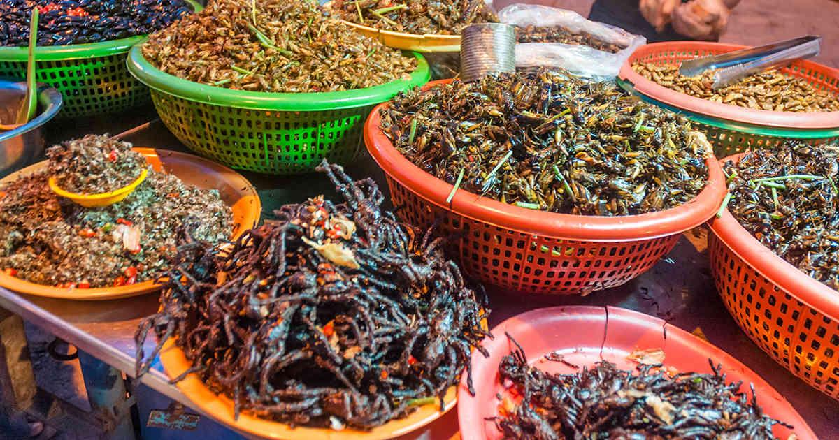 Los insectos, alimento del futuro